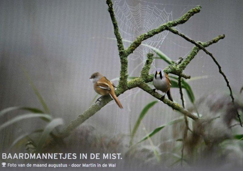Foto van de maand Augustus 2020  van Vogelbescherming-Nederland -fotogalerij.