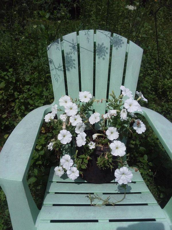 Love love love my white petunias
