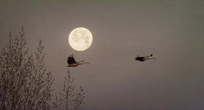 Moon Duet