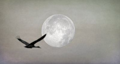 Moon Flight