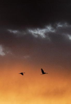 Magical Flight in the Sunrise