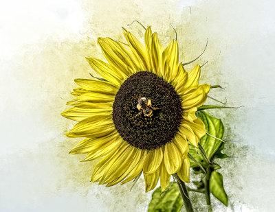 Sara's Sunflower