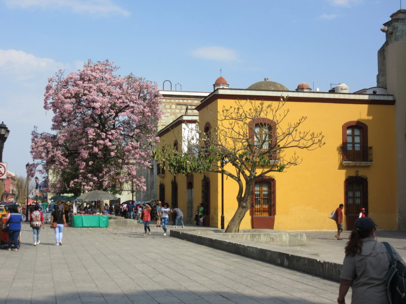 Colonial buildings and lovely trees
