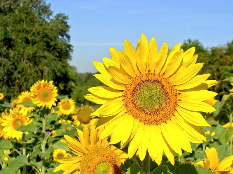 The_sun_salutation_1.jpg