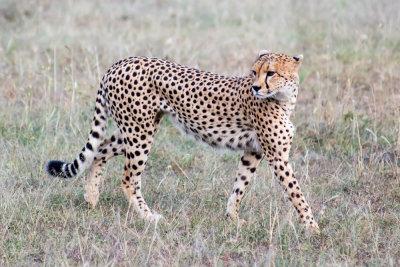 2019 Safari photo au Kenya et Tanzanie