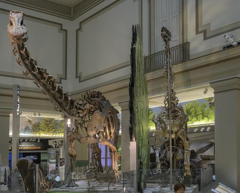 Incredibly long-necked, long-tailed Sauropod dinosaur