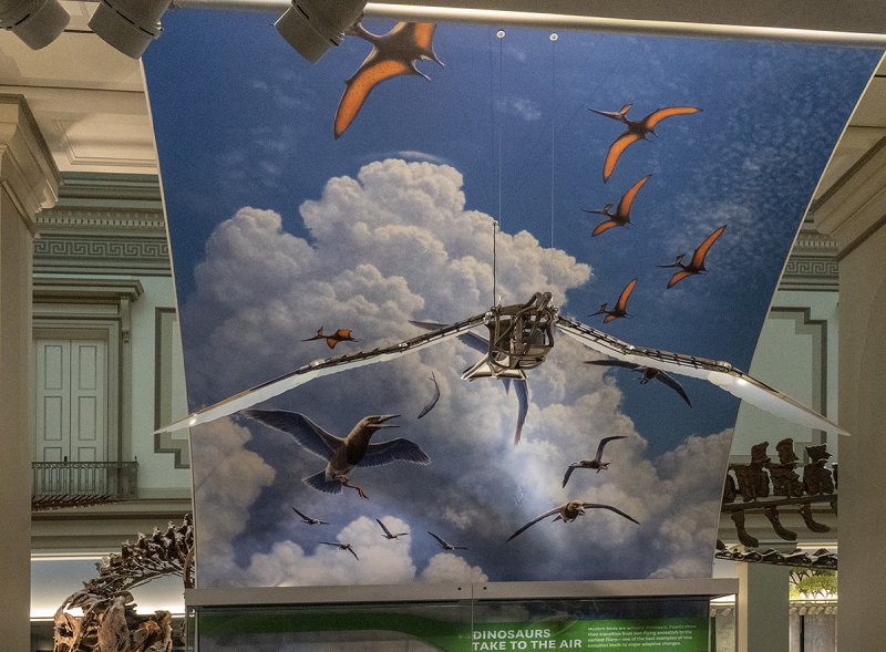 'Dinosaurs take to the air'