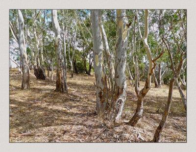 Side paddock full of self-sown trees.