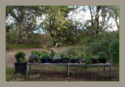 My Plant Nursery