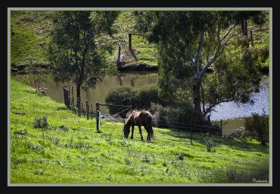 Merlin near a dam
