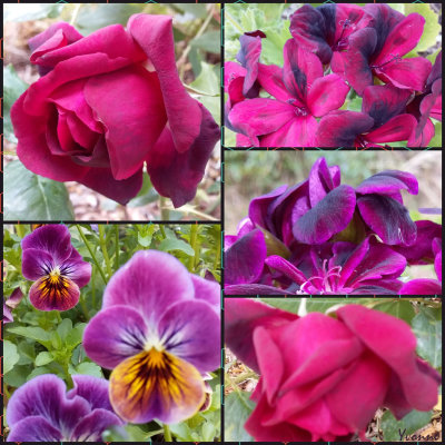 The Deep Deep Reds/Purples