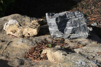 Hard like rocks!