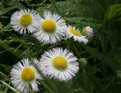 Flowers 2021