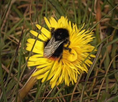 Bee careful.jpg