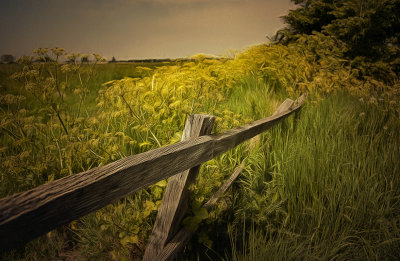 The old fence.jpg