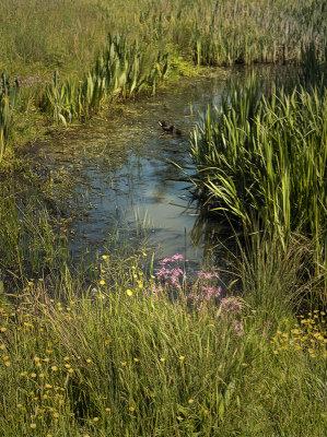 village pond.jpg
