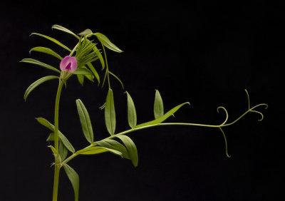 wild flower 1.jpg
