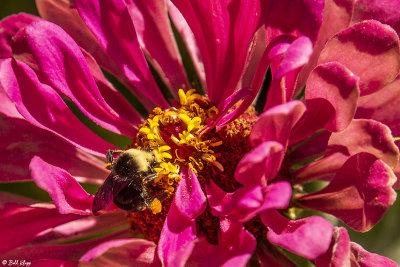 Bee on Flower  6