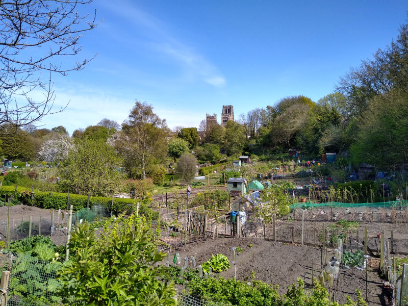Durham allotments and Cathedral
