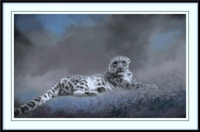 Snow Leopard....