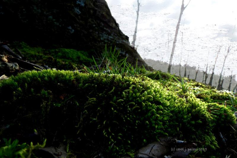 The Moss -- Cosmo Sheldrake