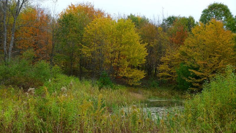2019 Fall Foliage DSC08280_dphdr.jpg