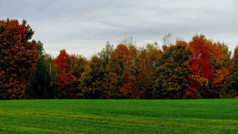 2019 Fall Foliage DSC08308_dphdr.jpg