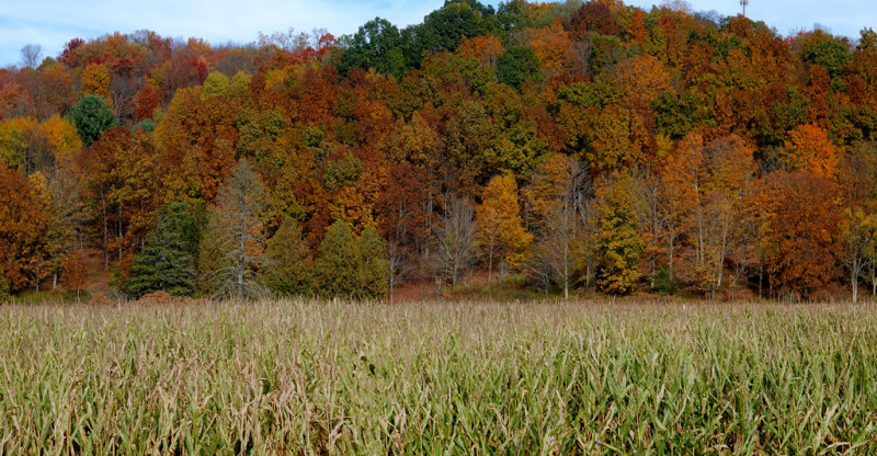 2019 Fall Foliage RX405494_dphdr.jpg