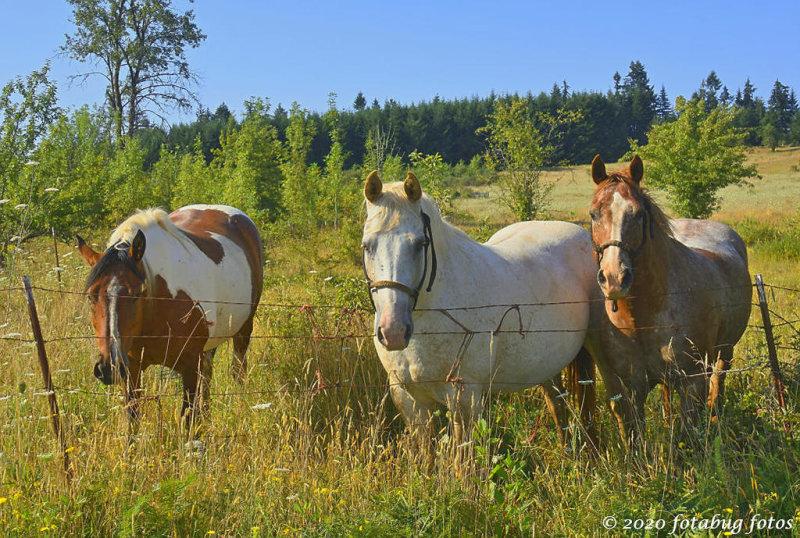 Neighborly Horses