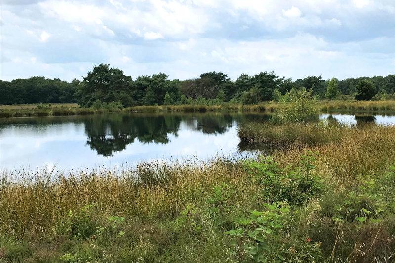 habitat oostelijke witsnuitlibel