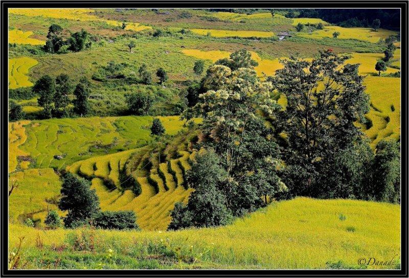 Valleys of Sikkim.