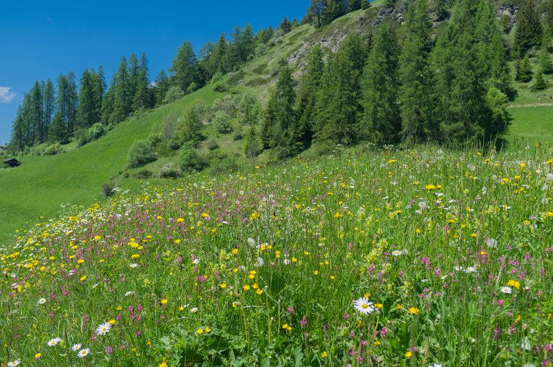 Armentara Meadows