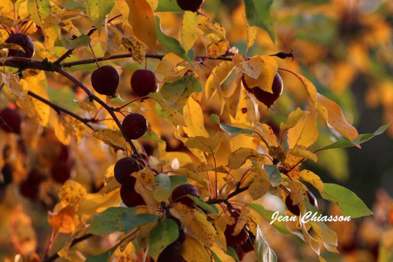 Un matin d`automne