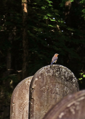 Ella's visitor, Chichester Cemetery, Bedford, New York, 2019