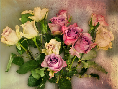 Declension of a rose