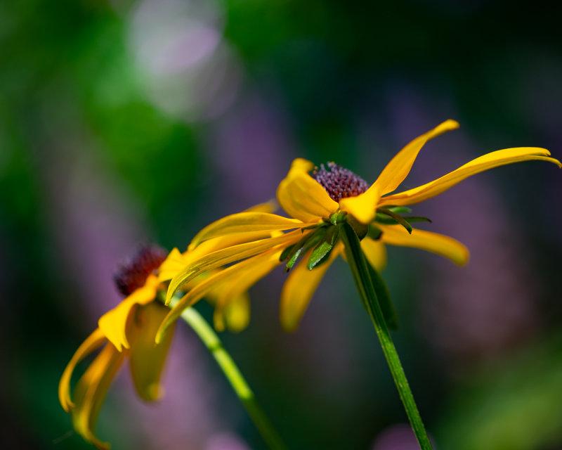 Warm Summer Yellow