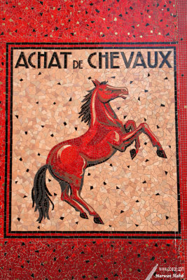 Red Horse / Cheval rouge