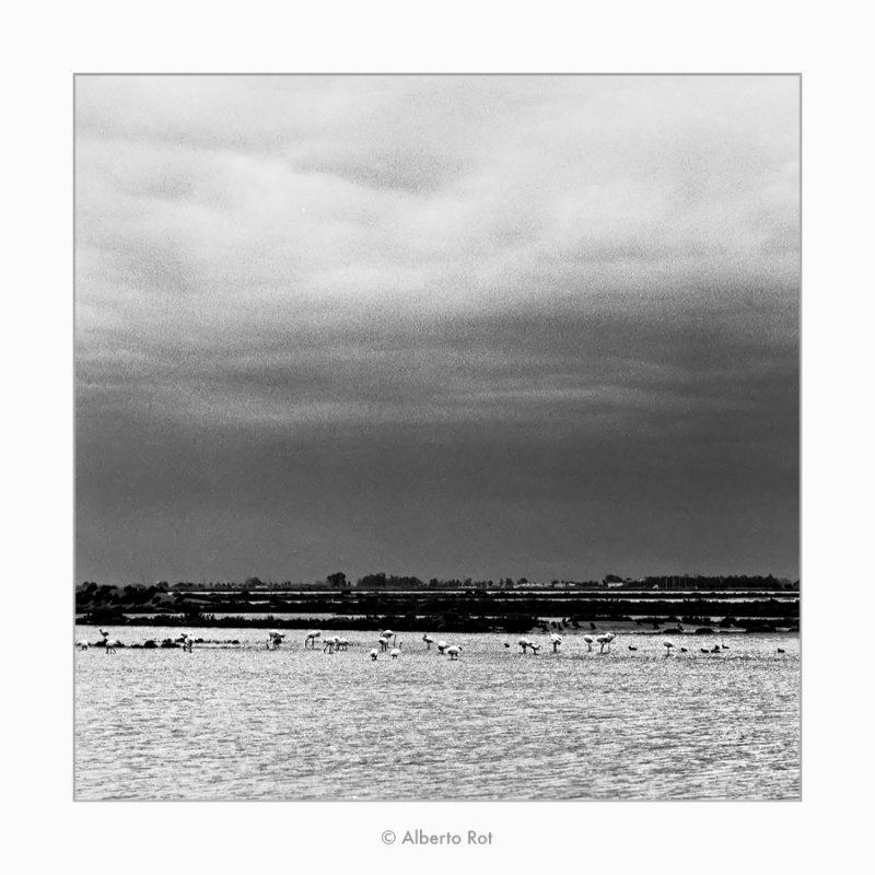 19/02/2019 ·  Delta de l'Ebre