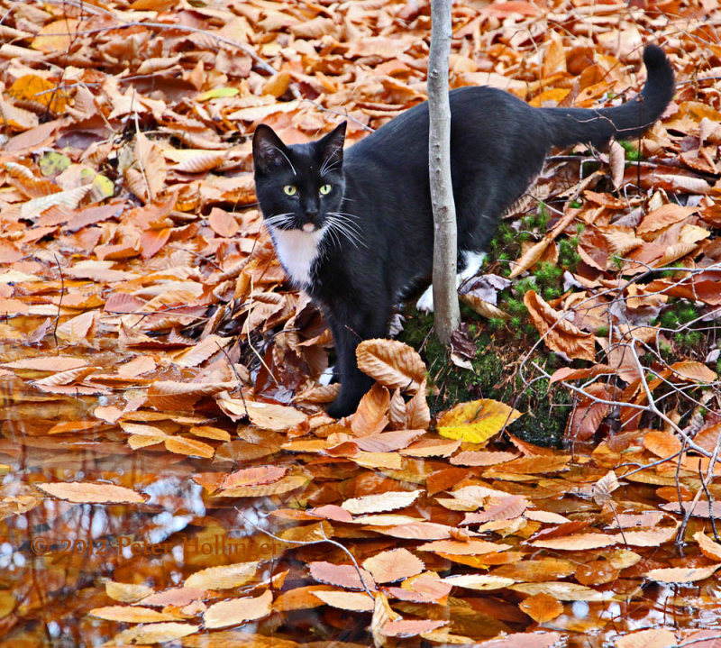 Rocky drank at an autumnal pool