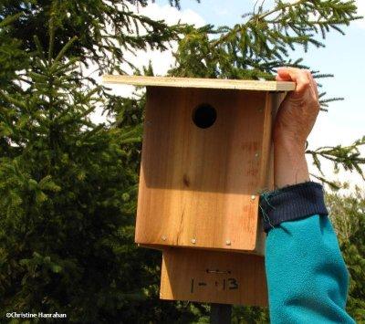 Installing the new bird box