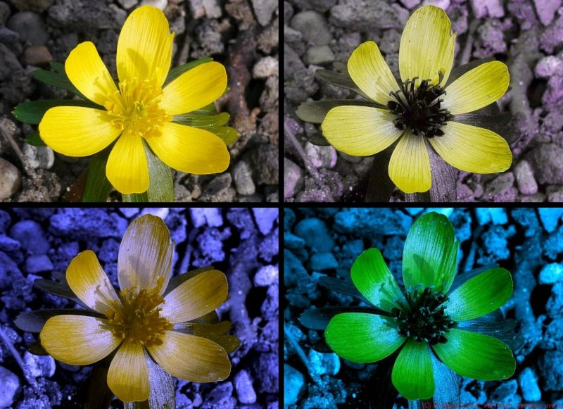How Do Bees And Butterflies See Spring Flowers