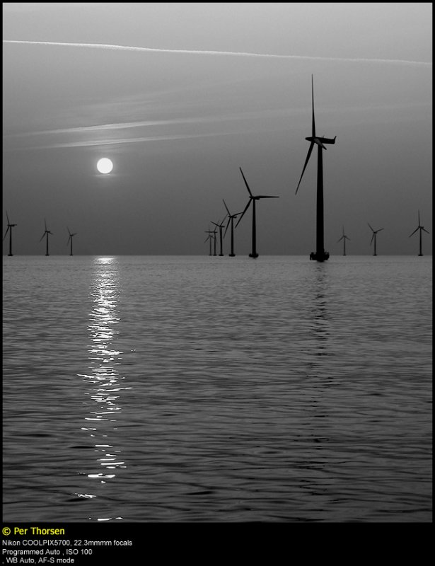 Nysted Offshore Wind Farm
