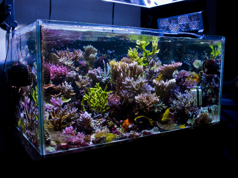 Fs ft 67g starphire rimless tank reef central online for How to clean an old fish tank