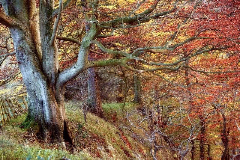 20121103 - Tree
