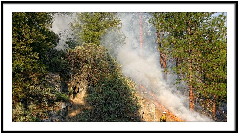 Forest Fire Regeneration