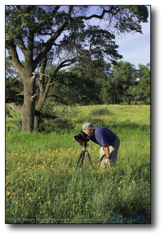 Arizona : Tom Vezo Shoots Poppy