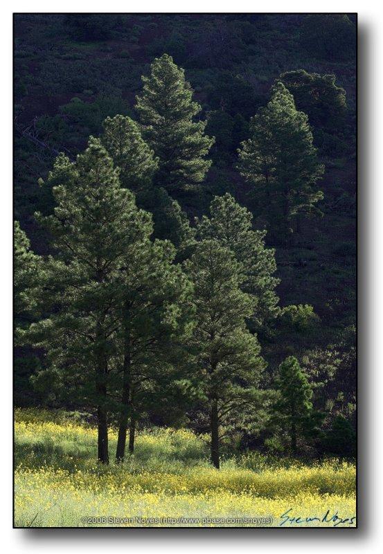 Northern AZ : Early Light