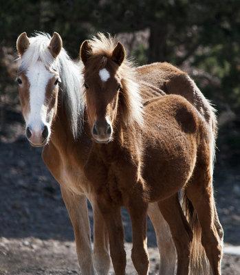 Wild Horses of Placitas