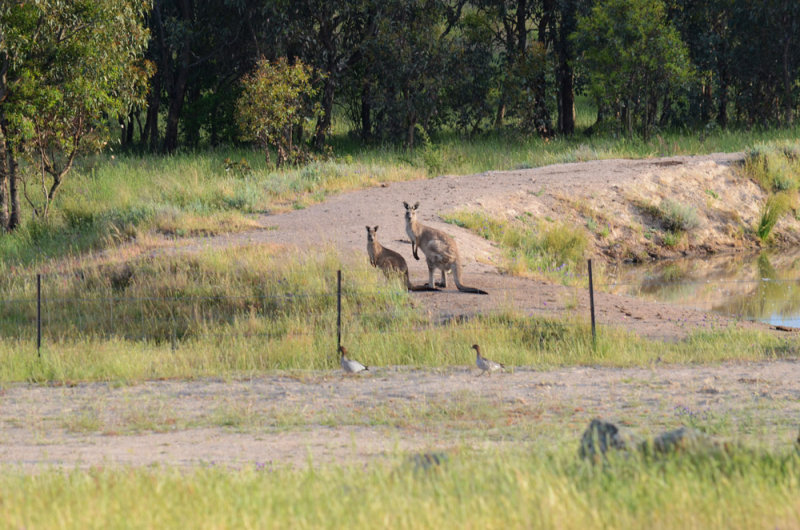 Some of the native wildlife