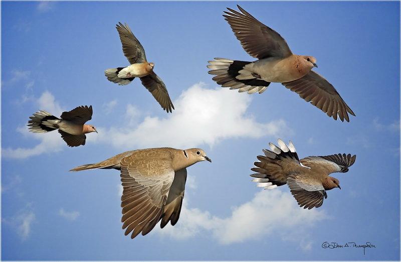 Doves_resize.jpg
